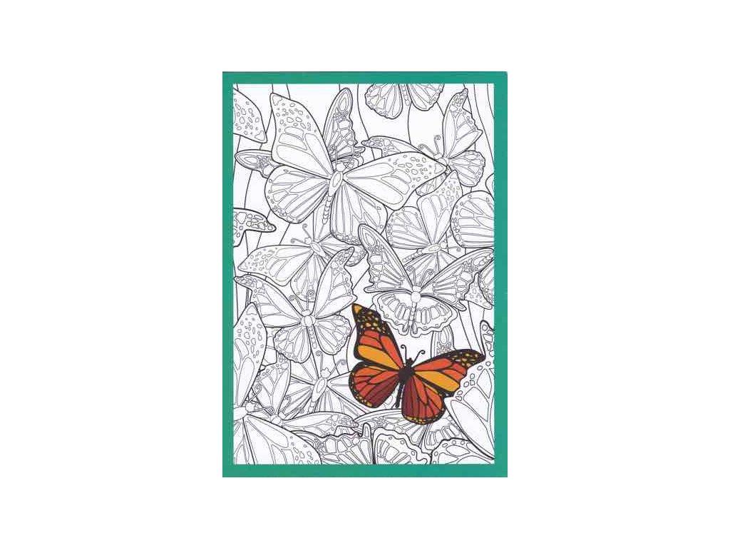 Pohlednice motýl k vymalování