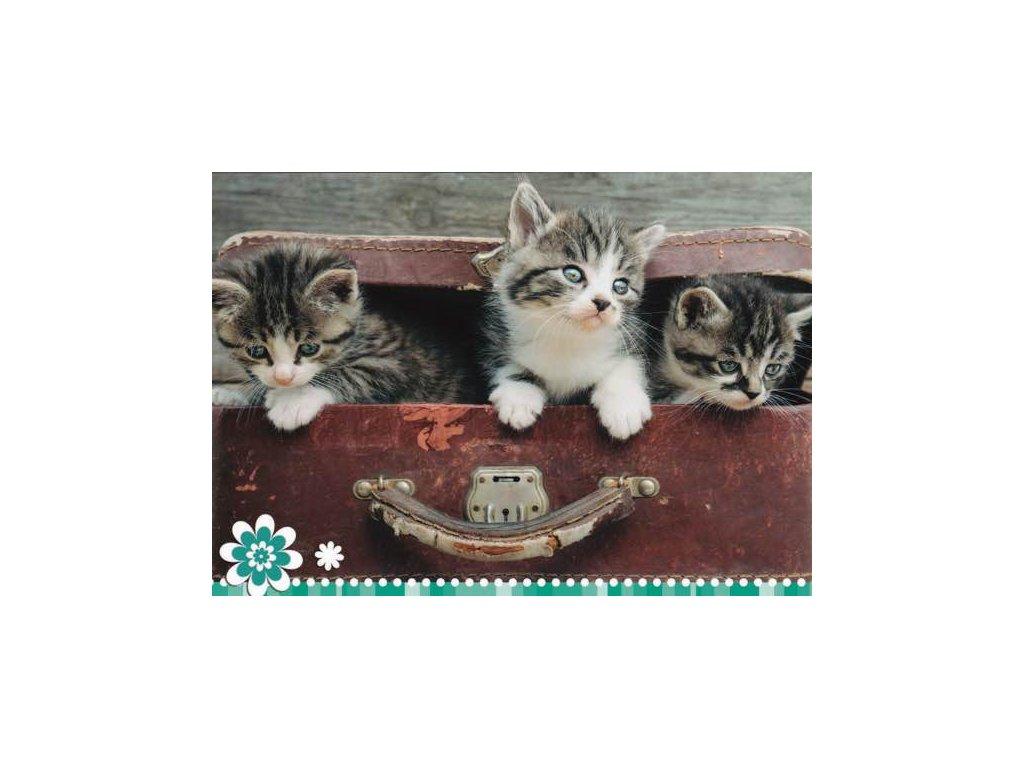 Pohlednice Koťata 59