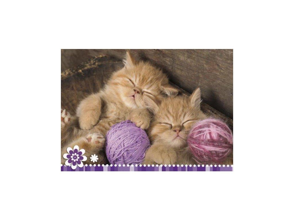 Pohlednice Spící koťata 62
