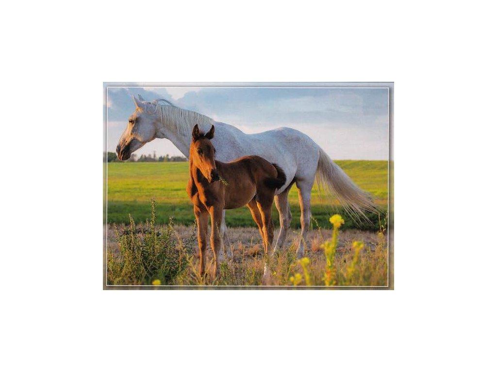 Pohlednice Koně 51