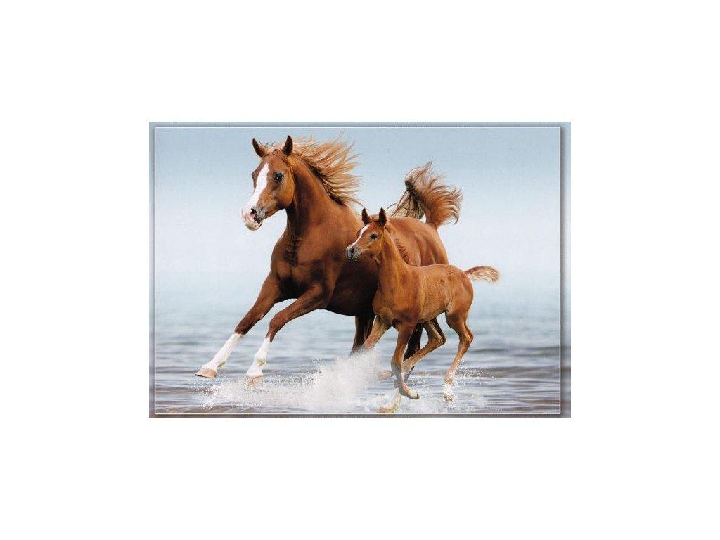 Pohlednice Koně 52