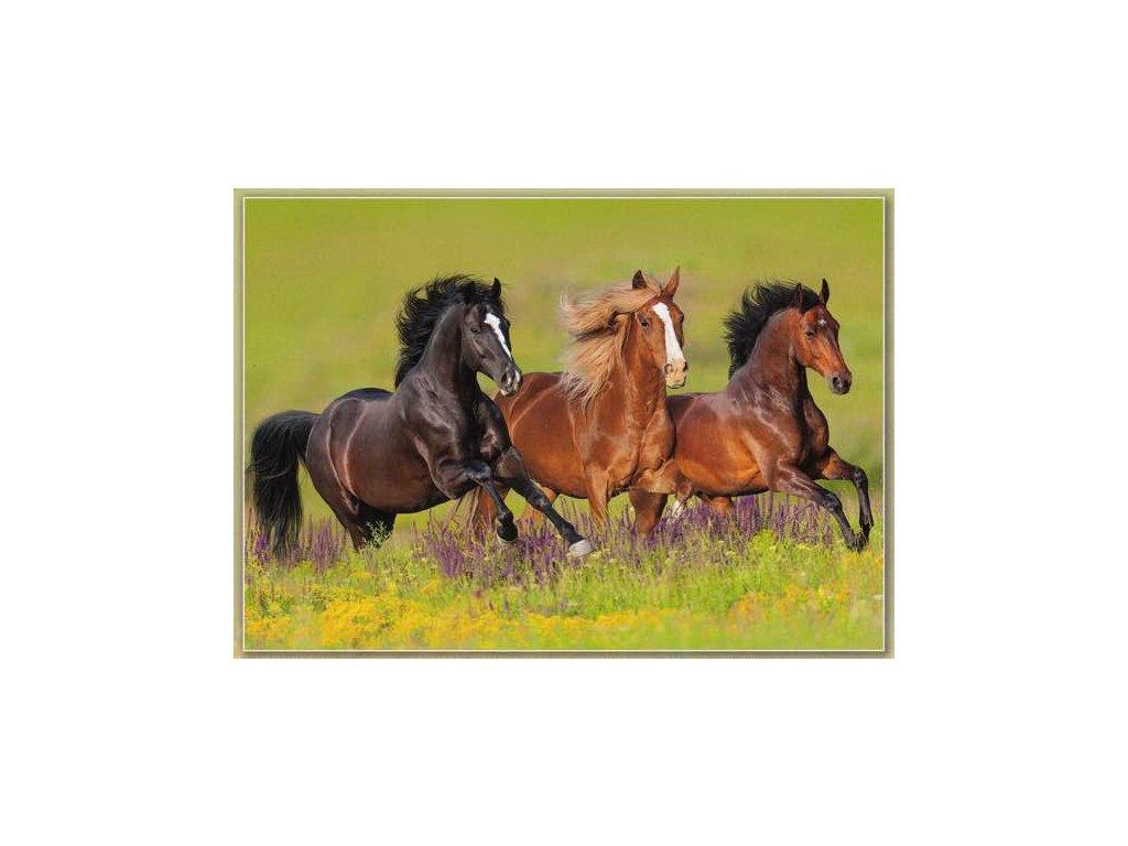Pohlednice Koně 53