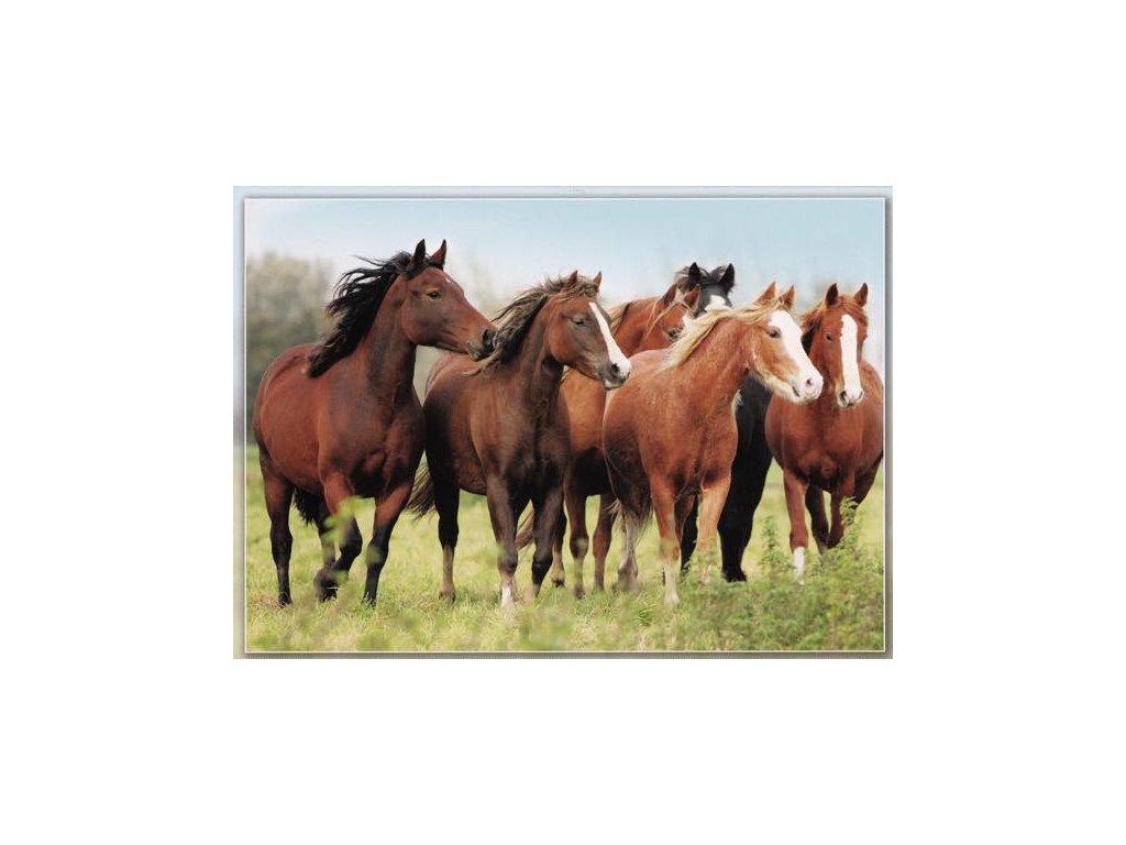 Pohlednice Koně 55