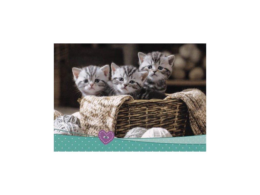 Pohlednice Koťata 65