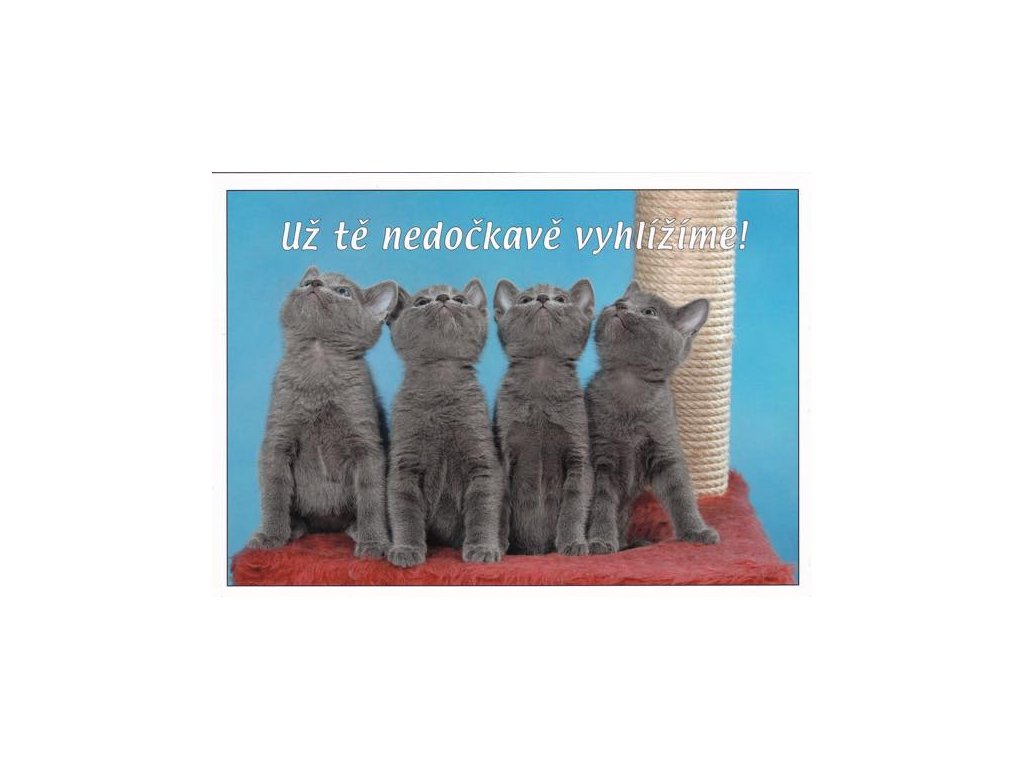 Pohlednice s textem (koťata)