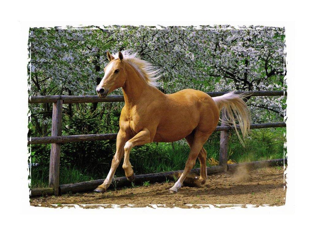 Pohlednice kůň 13