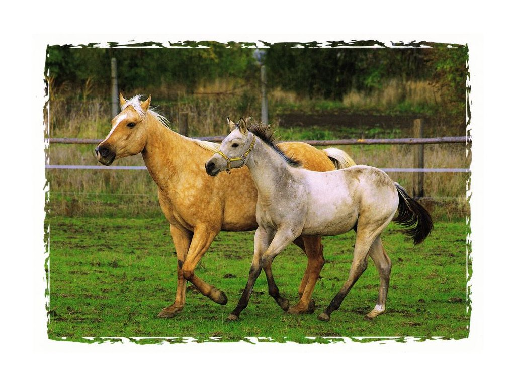 Pohlednice koně 14