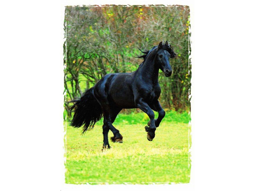 Pohlednice kůň 15