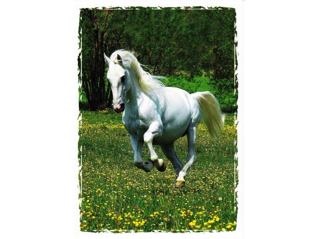 Pohlednice kůň 16