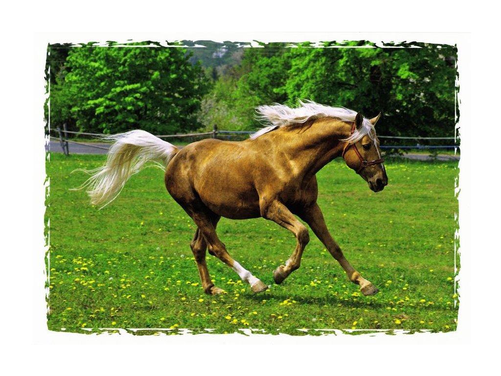 Pohlednice kůň 17