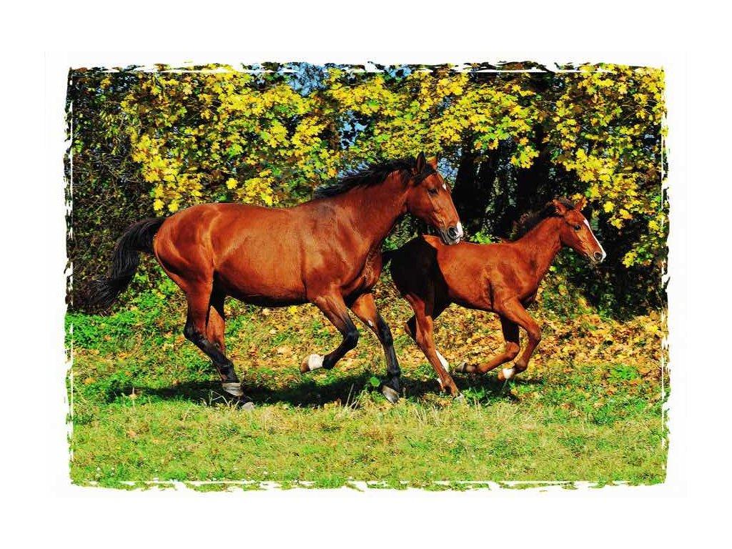 Pohlednice koně 18