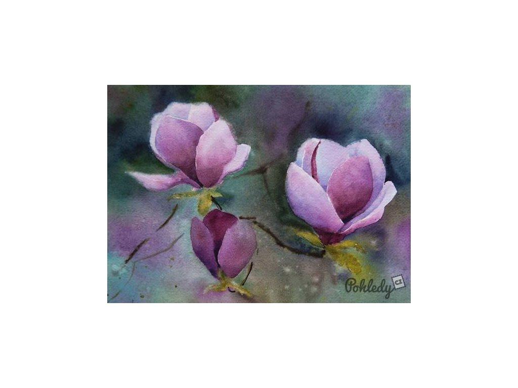 Pohlednice Magnolie