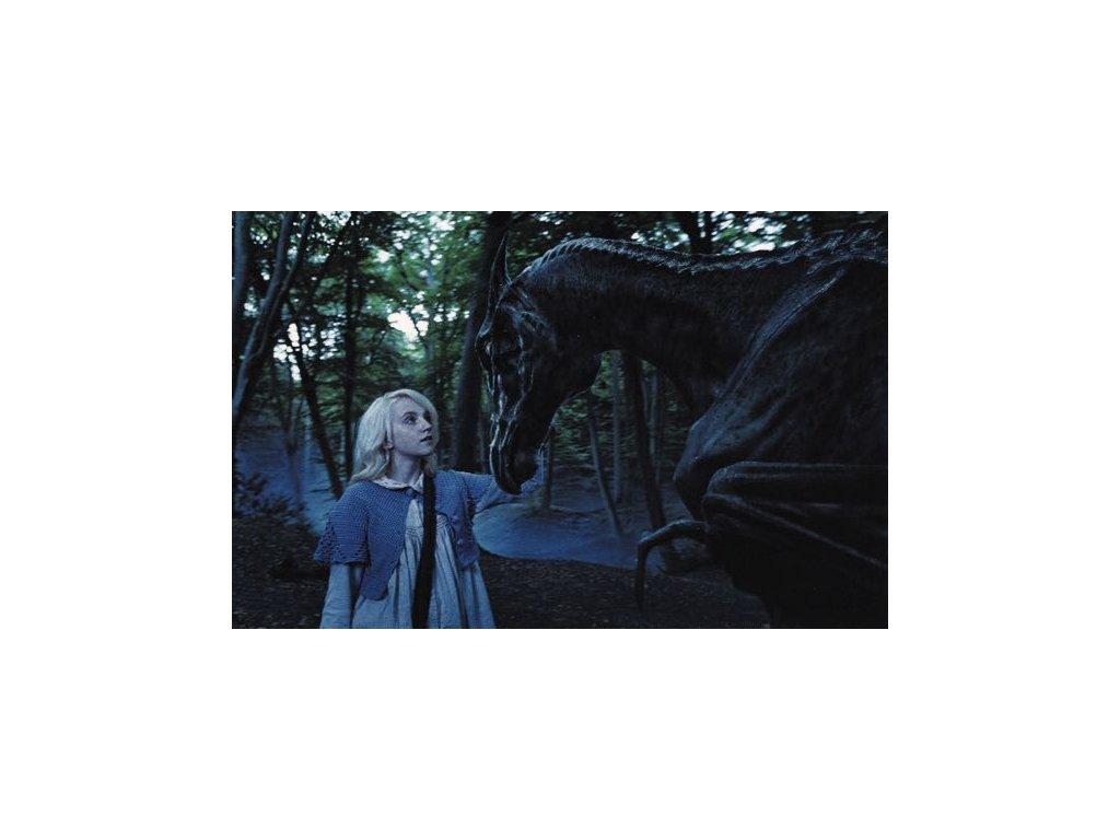 Pohlednice Harry Potter 50