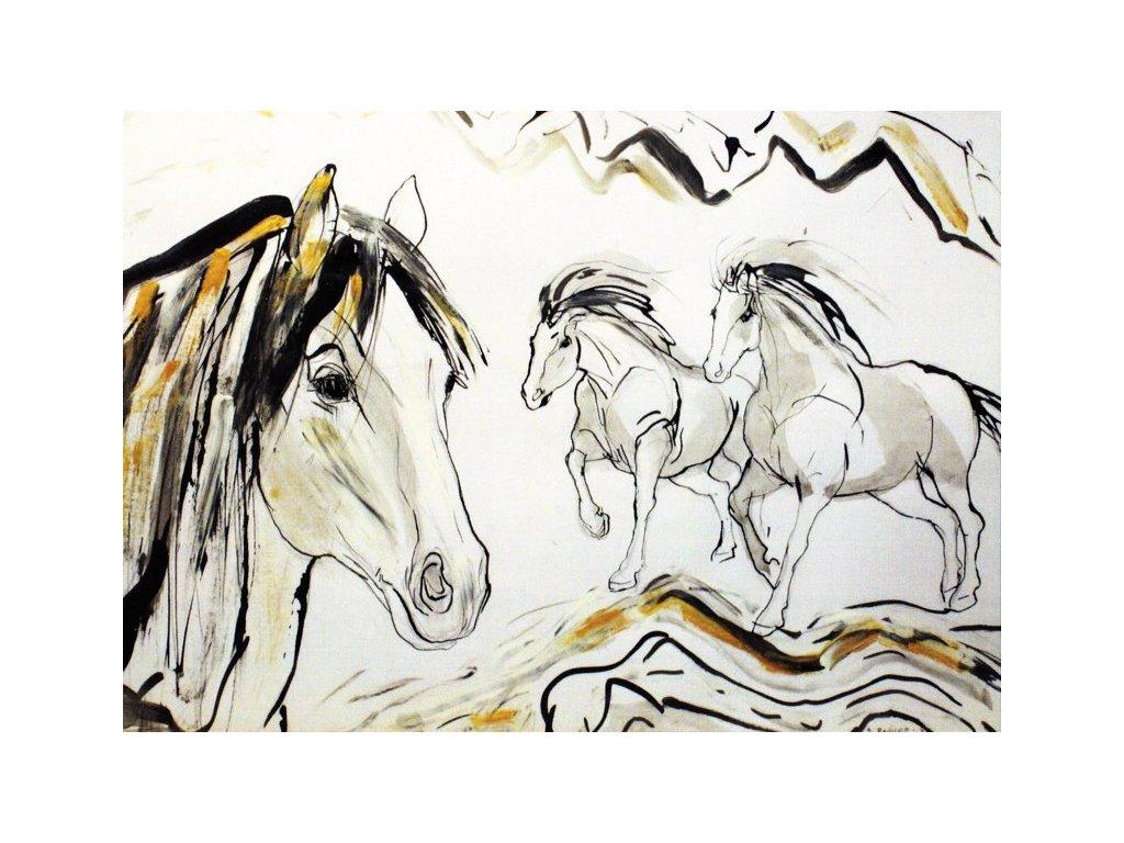 Pohlednice koně 8
