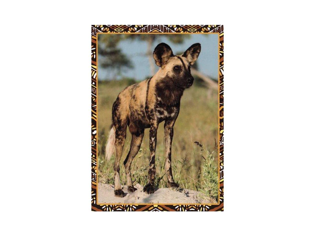 Pohlednice Hyena