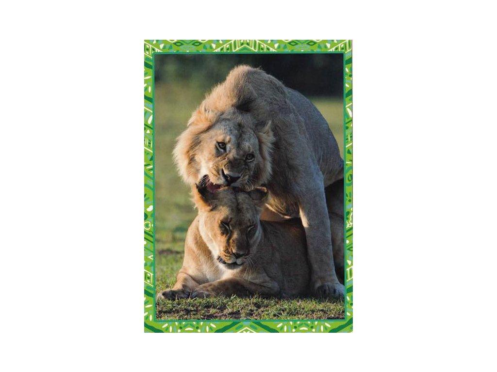Pohlednice Lev s lvicí