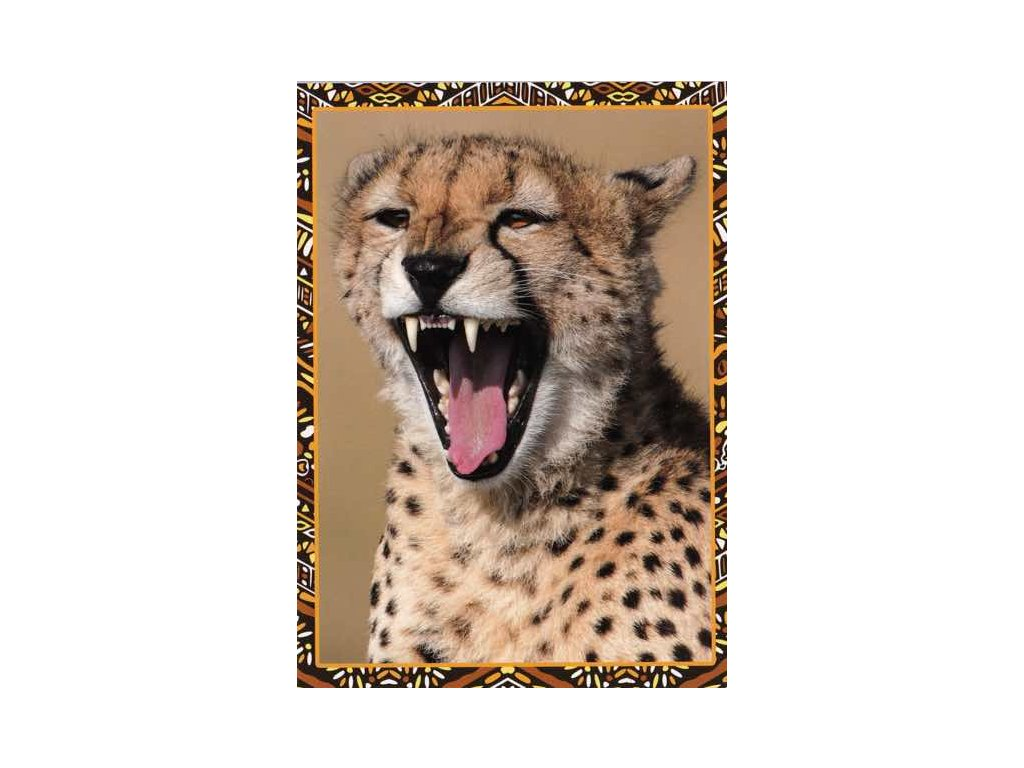 Pohlednice Gepard