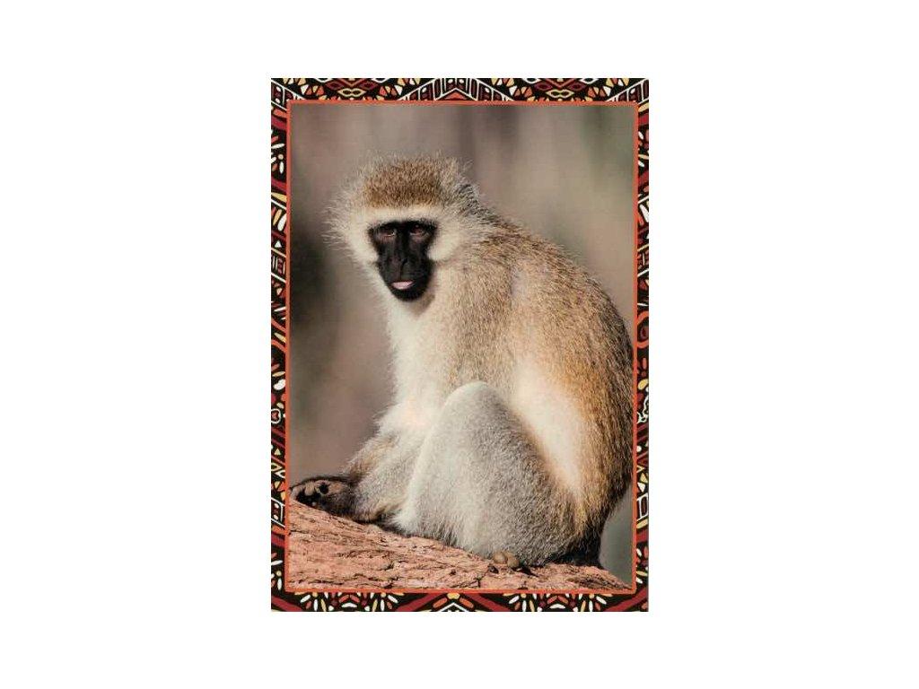 Pohlednice Opička Hulman