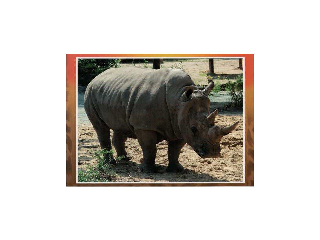 Pohlednice Nosorožec dvourohý