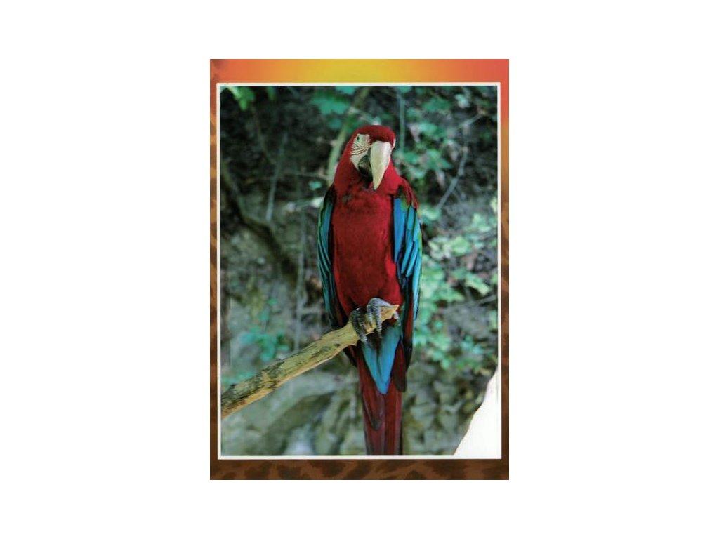 Pohlednice Papoušek Ara