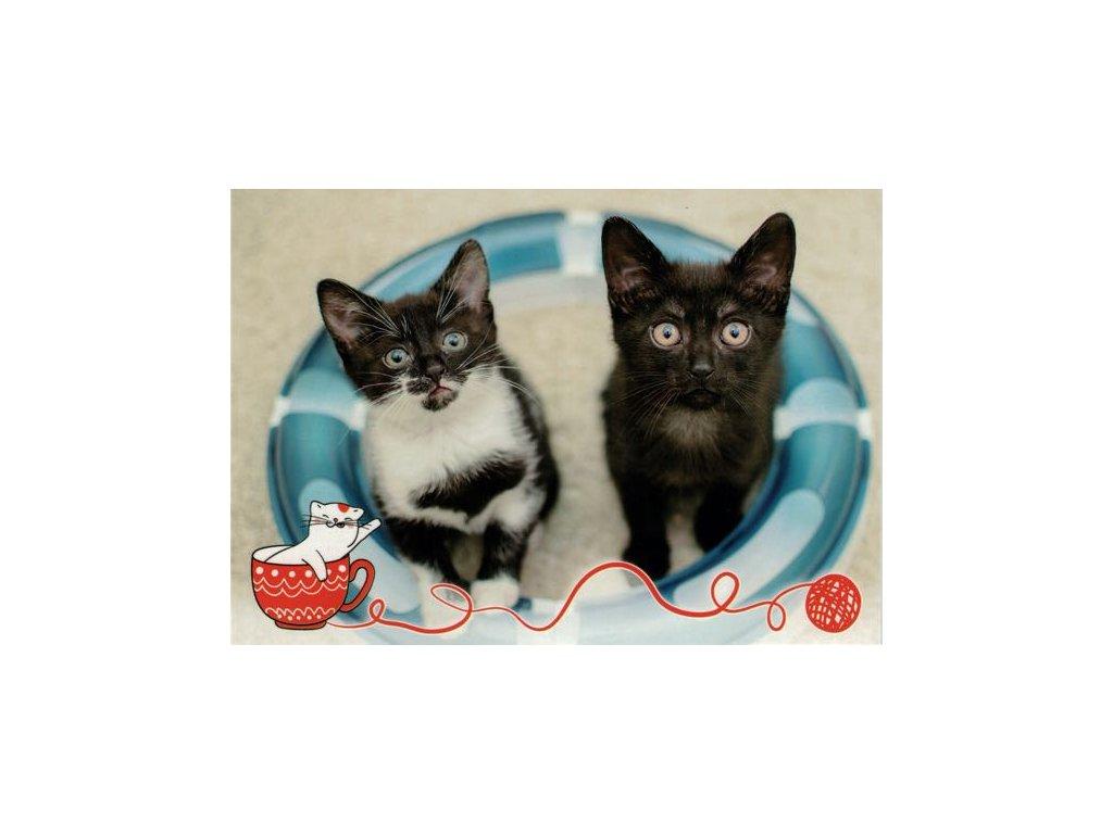 Pohlednice koťata 68