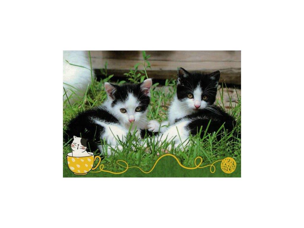 Pohlednice koťata 74