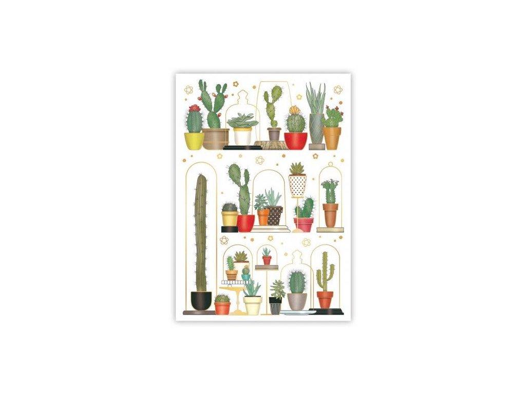Pohlednice Kaktusy