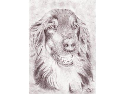 Pohlednice pes (setr)