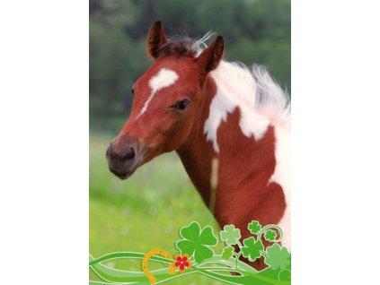Pohlednice Kůň 56