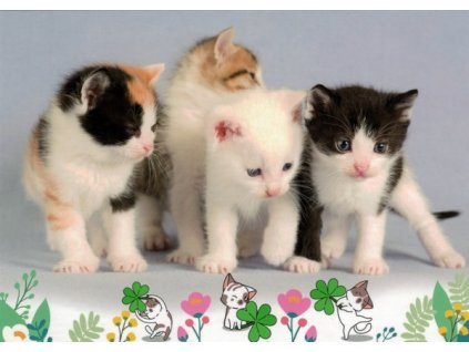 Pohlednice Kočky 82