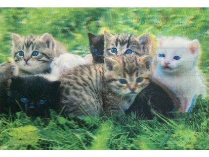 3D pohlednice Koťata