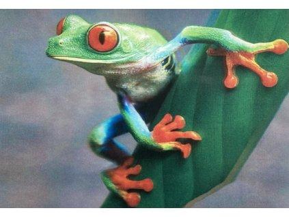 3D pohlednice Žába