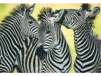 3D pohlednice Zebry
