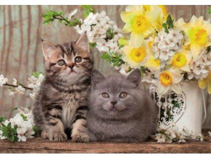 Pohlednice Kočky 85