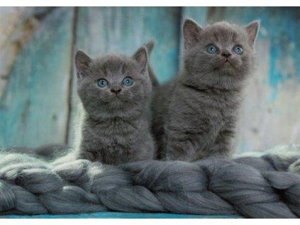 Pohlednice Kočky 87