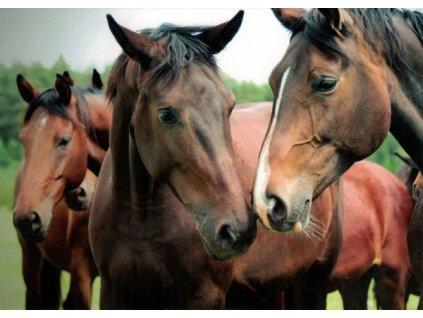 Pohlednice Koně 65