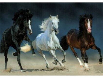 Pohlednice Koně 66