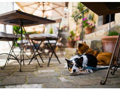 Pohlednice Psi pod stolem