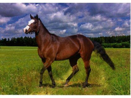 Pohlednice kůň 2