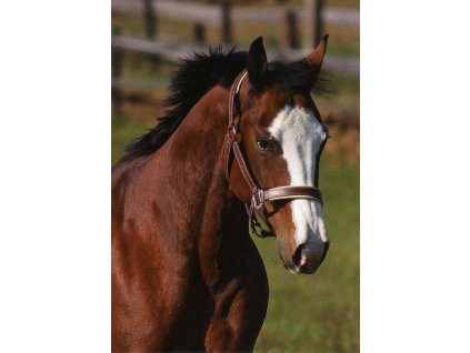 Pohlednice kůň 3