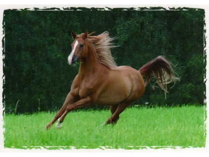 Pohlednice kůň 8