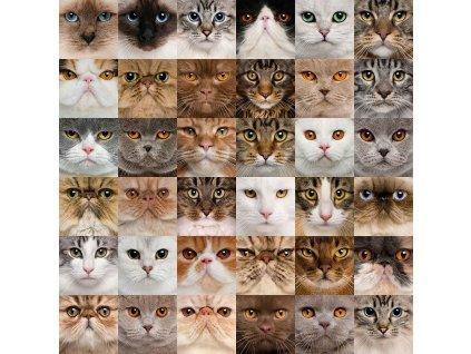 Pohlednice kočky