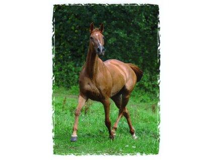 Pohlednice kůň 9