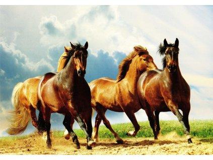 Pohlednice koně