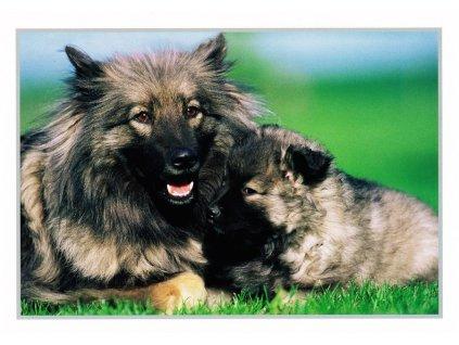 Pohlednice psi 31