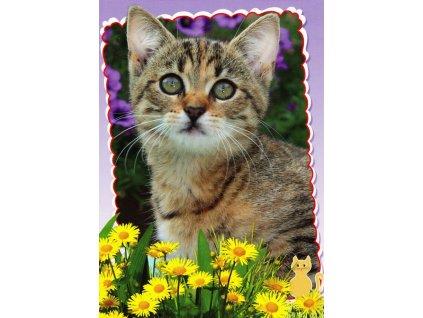 Pohlednice kočka 17