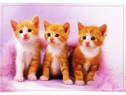 Pohlednice kočky 27