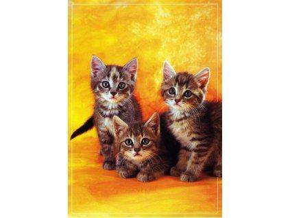 Pohlednice kočky 30