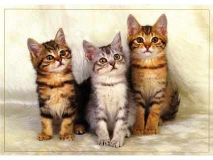 Pohlednice kočky 31
