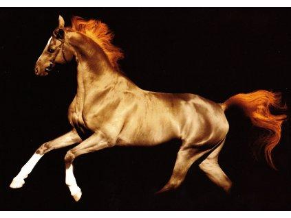 Pohlednice magický kůň